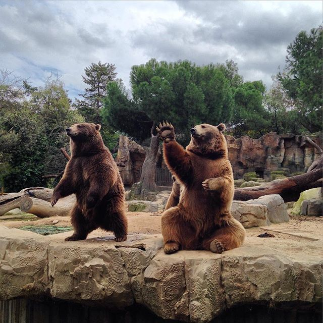 insta-bears